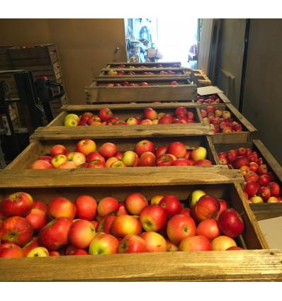 Nyplukkede æbler 1 kg
